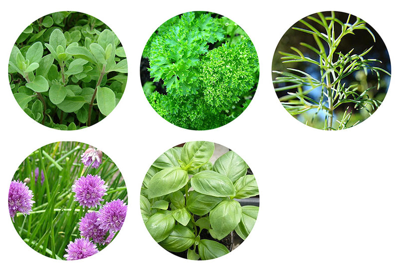 Desktop Garden - Herb Mix