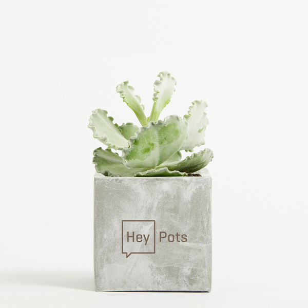 Medium Concrete Planted Pot - Coral