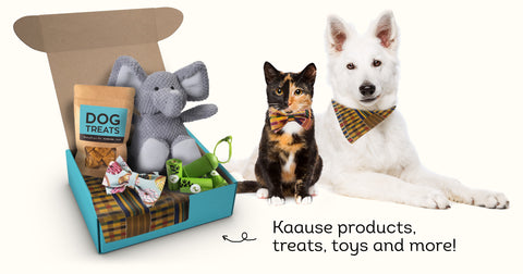 What's inside Kaause Subscription box?