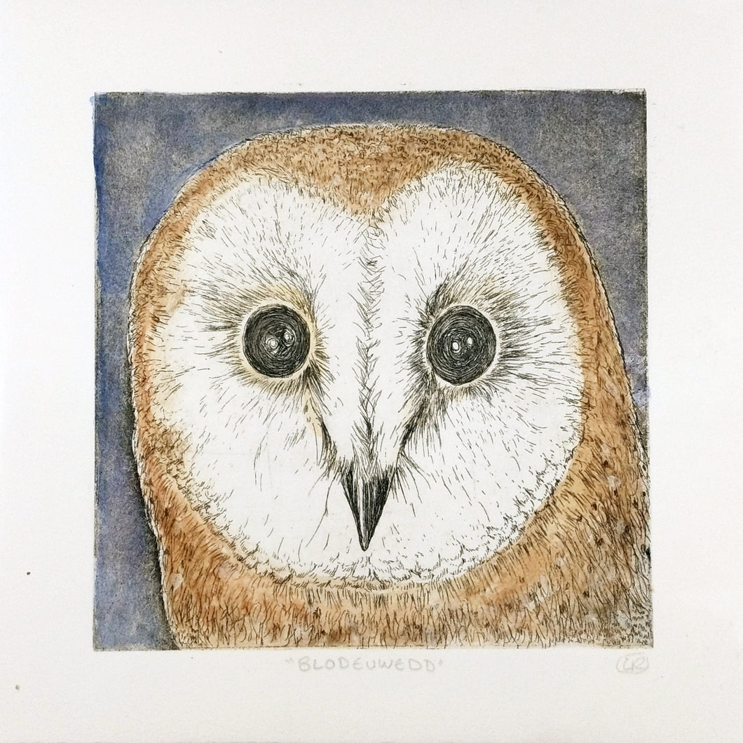 Barn Owl Etching