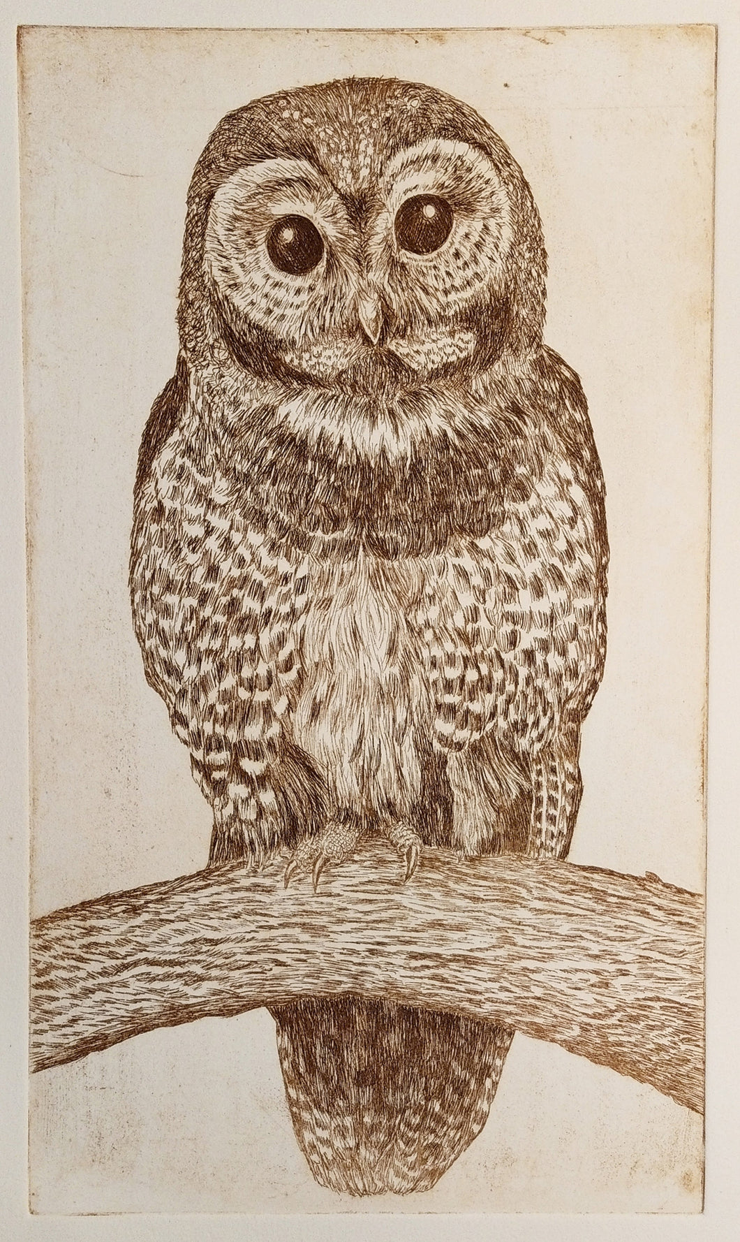 Spotted Owl Etching