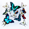 "12"" x 12"" exotic butterfly display"