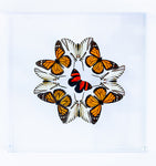 "12"" x 12"" exotic butterfly display - 1212kmzc - Regular price $375.00"