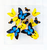 "12"" x 12"" exotic butterfly display - 1212PUP - Regular price $389.00"