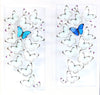 "TWO 12"" x 24"" exotic butterfly displays - 1224MCMP - Regular price $1,590.00"