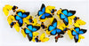 "12"" x 24"" exotic butterfly display - 1224upah - Horizontal"