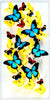 "12"" x 24"" exotic butterfly display - 1224upr - Vertical - Regular price $795.00"