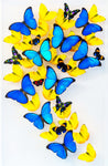 "Two 15"" x 24"" exotic butterfly displays - Heart Design"