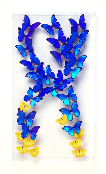 "18"" x 32"" exotic butterfly display - 1832MP - Regular price $2,200.00"