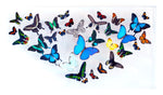"18"" x 32"" exotic butterfly display - 1832Multi - Regular price $2,200.00"