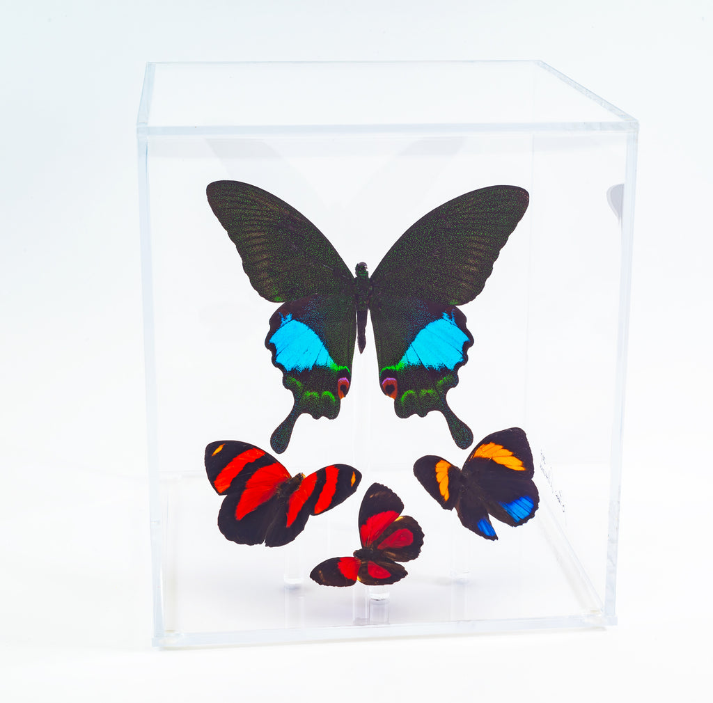 "6"" Tall Table Display - Karna Butterfly - Regular price $199.00"