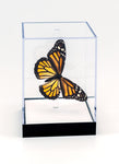 "5"" Tall Table Display - Monarch butterfly - Regular price $49.00"