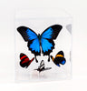"6"" Tall Table Display - Ulysses ""Blue Emperor Butterfly"" - Regular price $199.00"
