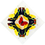 "7"" x 7"" exotic butterfly display - 77kdssp"