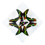 "7"" x 7"" exotic butterfly display - 77kdpsw"