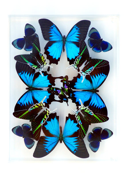 "9"" x 12"" exotic butterfly display - 912KULW Vertical - Regular price $349.00"