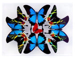 "9"" x 12"" exotic butterfly display - 912KSUS Horizontal - Regular price $349.00"