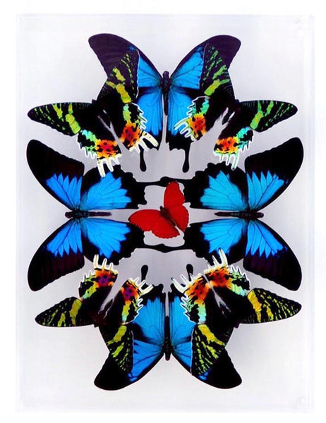 "9"" x 12"" exotic butterfly display - 912KSUS Vertical - Regular price $349.00"