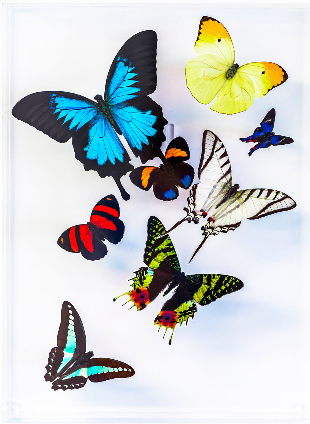 "9"" x 12"" exotic butterfly display - 912multi"