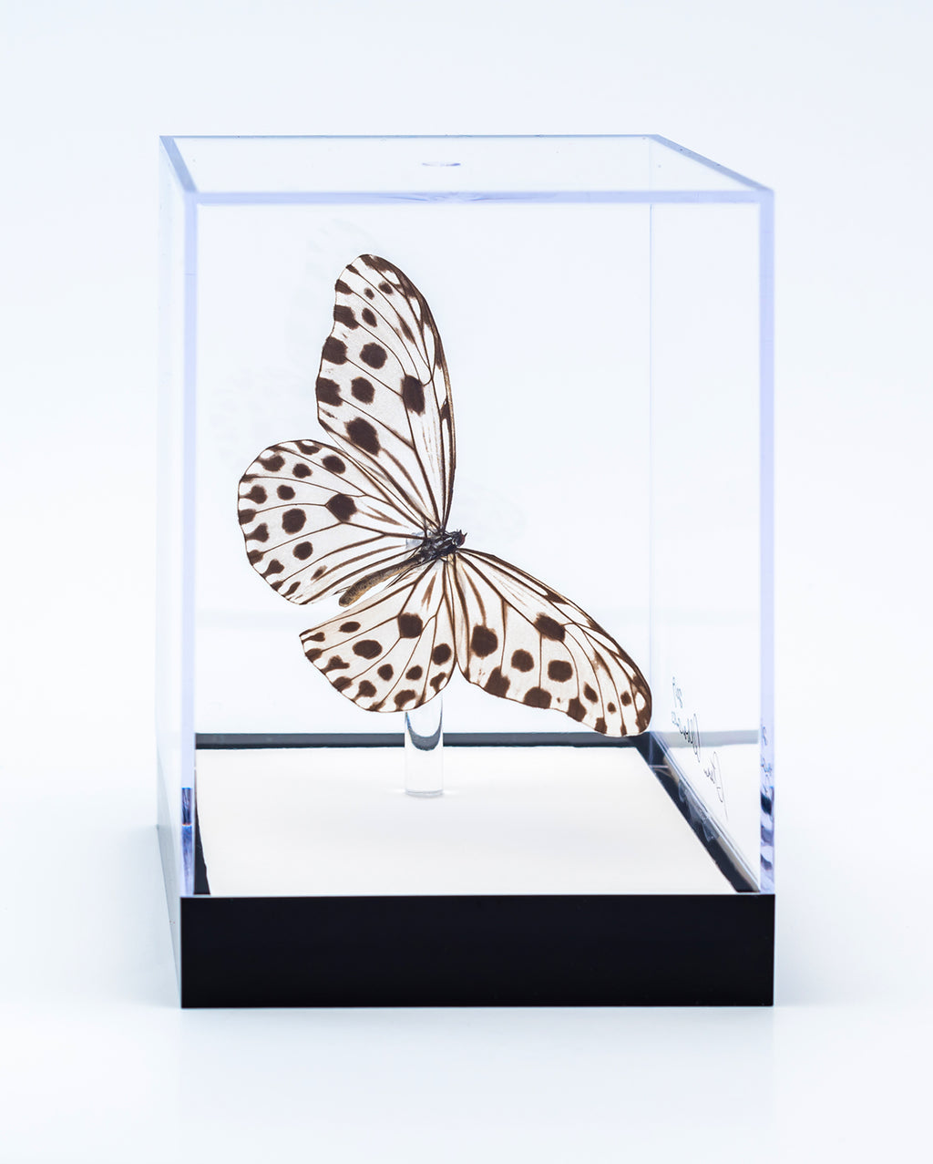 "5"" Tall Table Display - Rice Paper butterfly - Regular price $49.00"