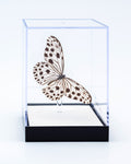 "5"" Tall Table Display - Rice Paper butterfly"