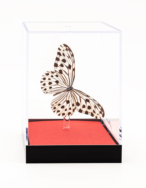 "5"" Tall Table Display - Rice Paper butterfly with red base"