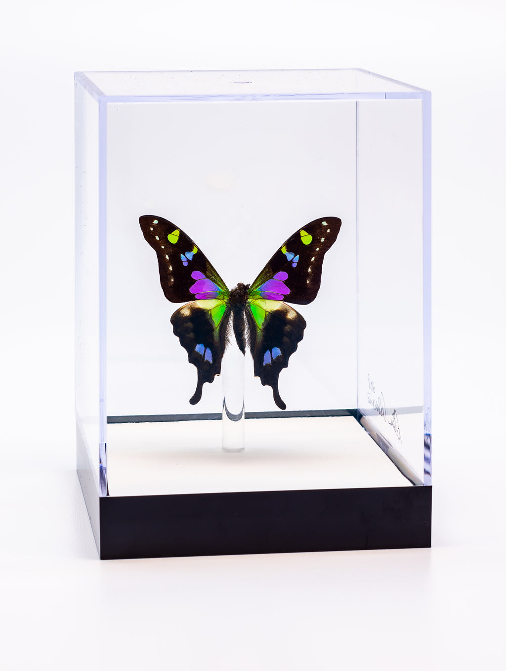 "5"" Tall Table Display - Weiski/Purple Heart butterfly"