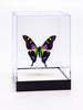 "5"" Tall Table Display - Weiski/Purple Heart butterfly - Regular price $49.00"