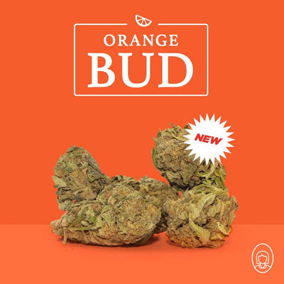 🍊 NEW ORANGE BUD 🍊