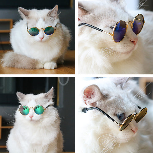 Boujee Cat Glasses