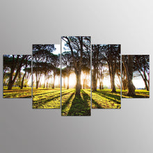 Sunshine Forest Scenery 5 Piece HD Multi Panel Canvas Wall Art Frame