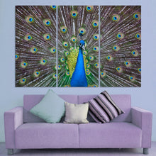 Elegant Peacock 3 Piece HD Multi Panel Canvas Wall Art Frame