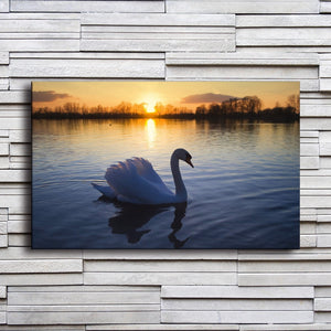 Beautiful Swan On Lake 1 Piece HD Multi Panel Canvas Wall Art Frame