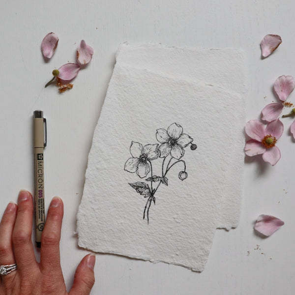 Original Drawing {Japanese Anemone} no 1.