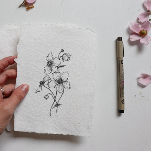 Original Drawing {Japanese Anemone} no 5.