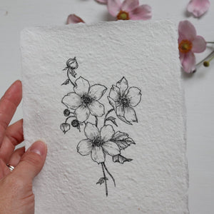 Original Drawing {Japanese Anemone} no 4.