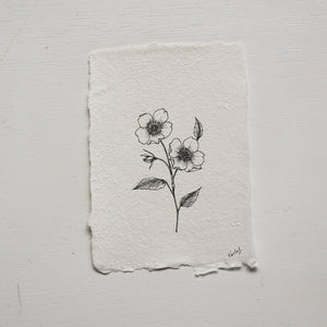 Original Drawing {Wild Rose} no 1.
