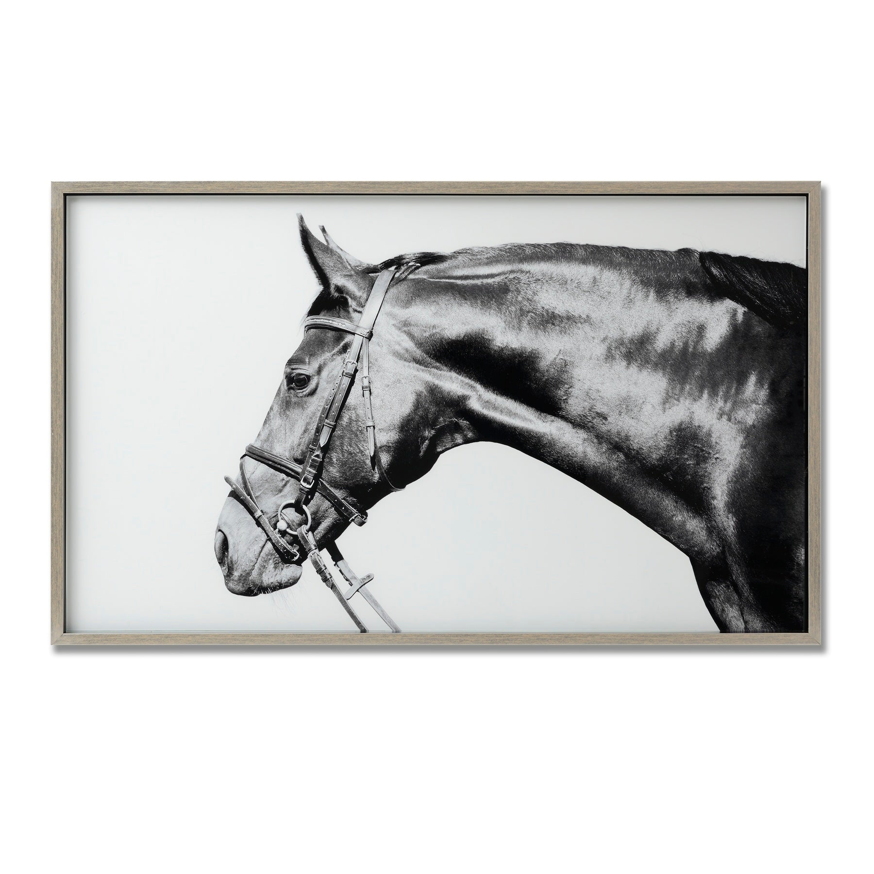 Thoroughbred Glass Image With Silver Frame