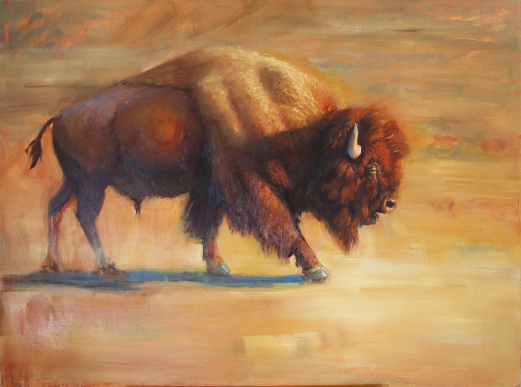Bison in contemporary - 36x48