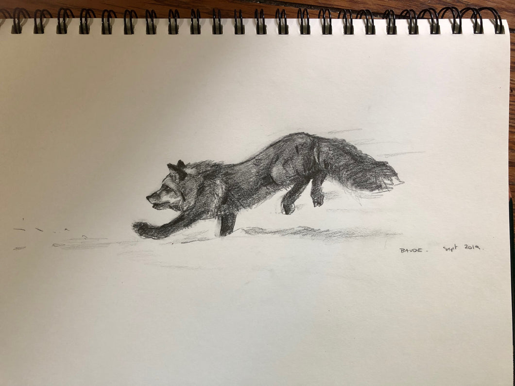 Fox leaping small drawing - 6x12