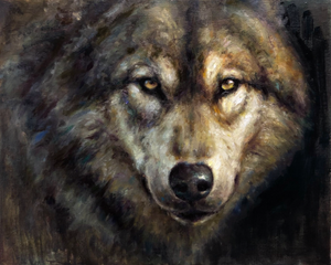 Timber Wolf Closeup
