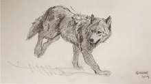 Load image into Gallery viewer, Original Pencil sketch - wolf in motion gesture - 5.5X11