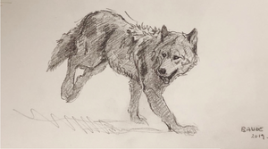 Original Pencil sketch - wolf in motion gesture - 5.5X11