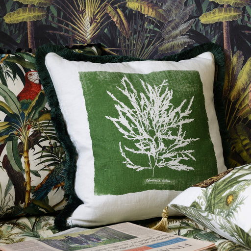 Algae Cushion by Mindthegap