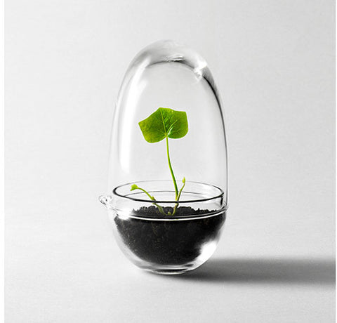 Grow Mini Greenhouse by Design House Stockholm