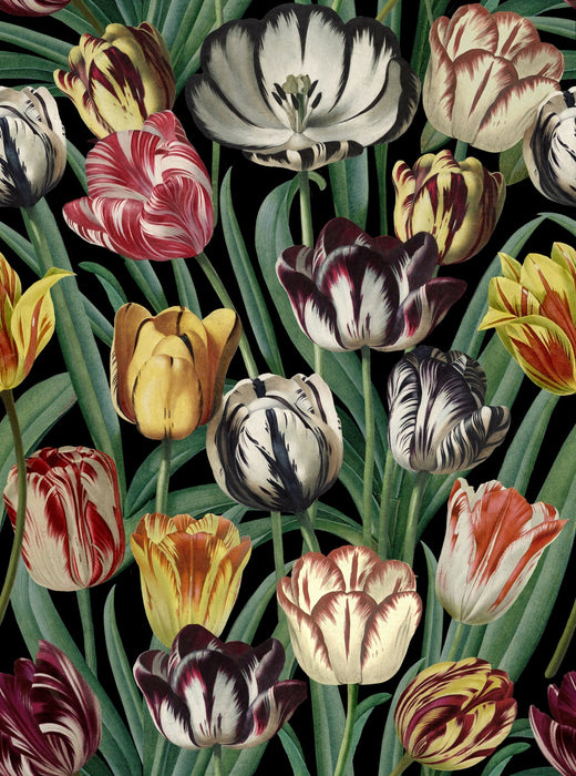 Tulips Wallpaper by Mindthegap