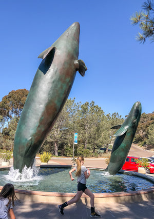 Guide to Birch Aquarium at Scripps