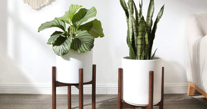 This Plant Stand From Amazon Transformed My Small Apartment - For Just $22!