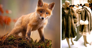 Retail Giants Macy's and Bloomingdale's Have Pledged to Ditch Fur by 2020