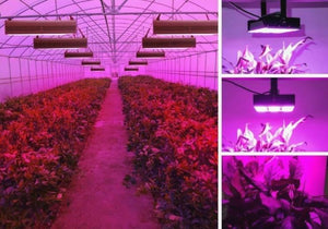 Remarkable 1000 Watt Led Grow Light